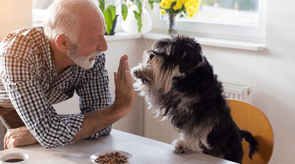 Haustiere für Senioren