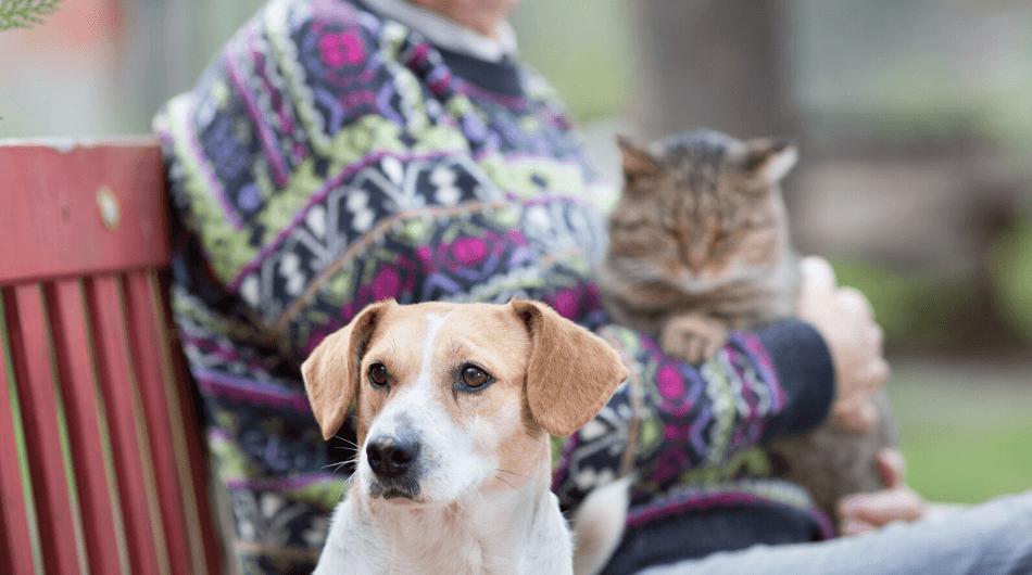 Welche Haustiere für Senioren?